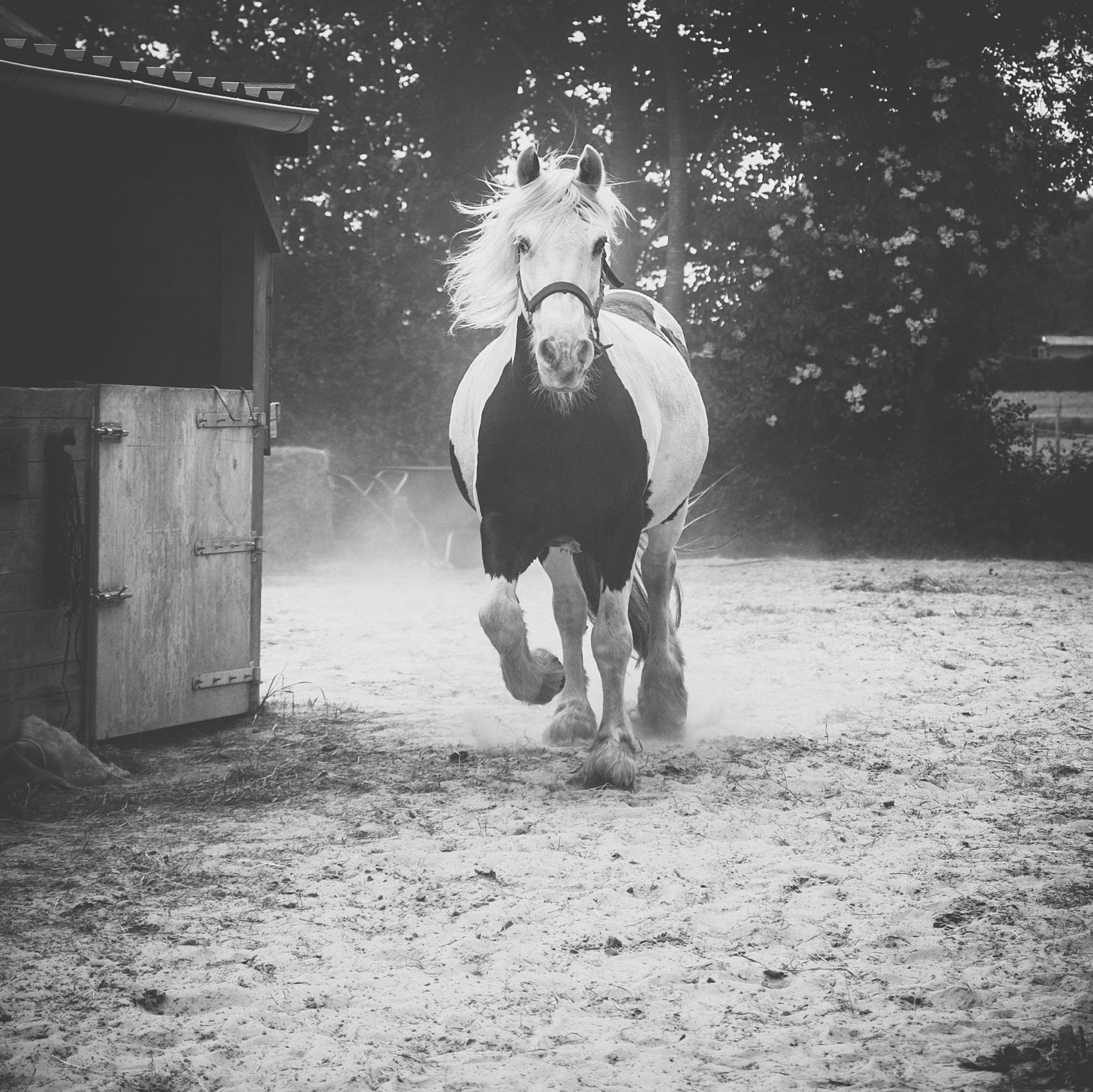 paarden-juni-2016-22